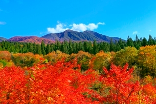 乳頭温泉郷の紅葉と秋田駒ヶ岳の写真素材 [FYI03059596]