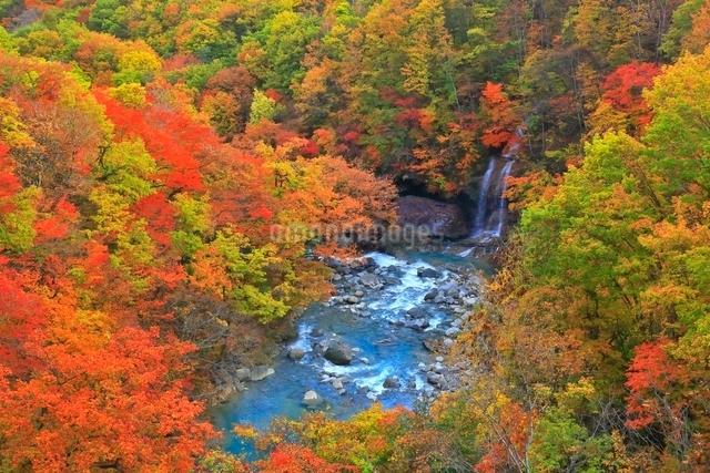 松川渓谷の紅葉の写真素材 [FYI03059598]