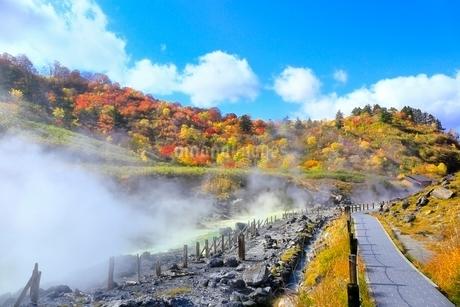玉川温泉の紅葉の写真素材 [FYI03059603]