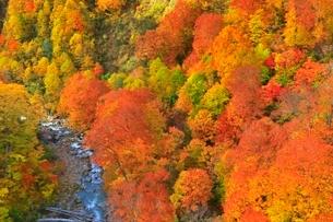 玉川温泉の紅葉の写真素材 [FYI03059604]