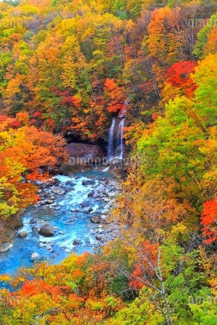 松川渓谷の紅葉の写真素材 [FYI03059606]