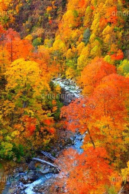 玉川温泉の紅葉の写真素材 [FYI03059617]