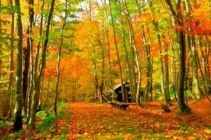 白神山地 ブナ林の紅葉と道の写真素材 [FYI03059620]