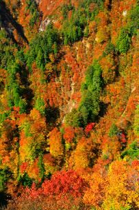 白神山地 釣瓶落峠の紅葉の写真素材 [FYI03059630]