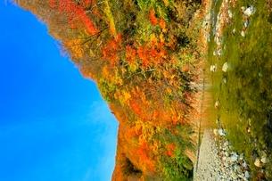 白神山地 暗門川と紅葉の写真素材 [FYI03059638]
