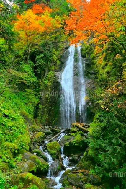 抱返り渓谷 回顧の滝の紅葉の写真素材 [FYI03059650]