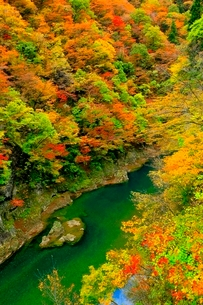 抱返り渓谷の紅葉の写真素材 [FYI03059652]