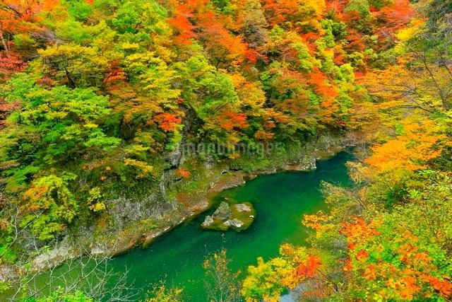 抱返り渓谷の紅葉の写真素材 [FYI03059653]