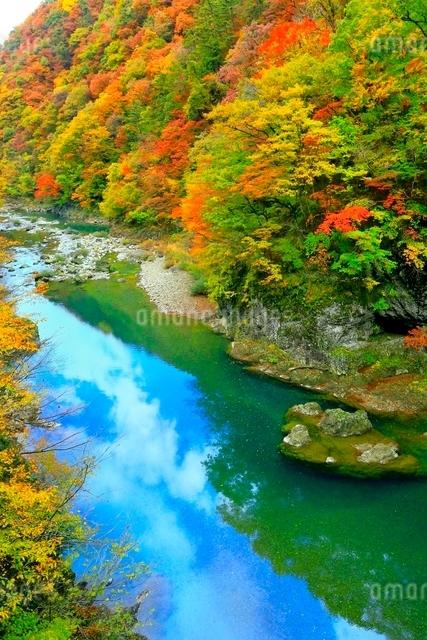 抱返り渓谷の紅葉の写真素材 [FYI03059654]