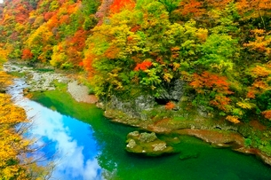 抱返り渓谷の紅葉の写真素材 [FYI03059655]