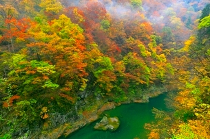 抱返り渓谷の紅葉の写真素材 [FYI03059656]