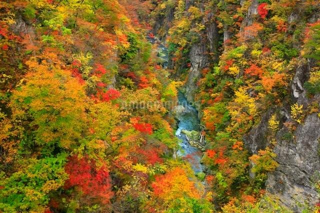 鳴子峡の紅葉の写真素材 [FYI03059658]