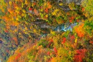 鳴子峡の紅葉の写真素材 [FYI03059661]
