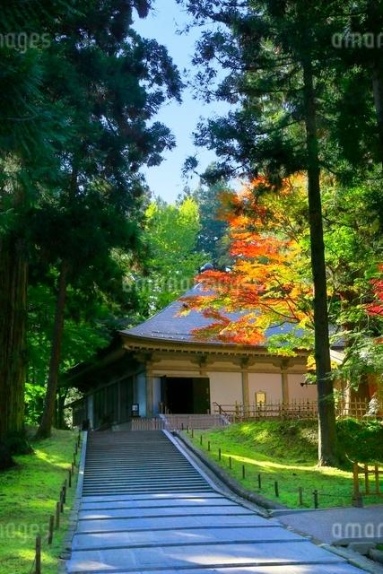 中尊寺金色堂と紅葉の写真素材 [FYI03059691]