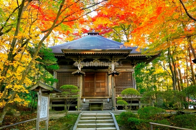 中尊寺峯薬師堂と紅葉の写真素材 [FYI03059697]