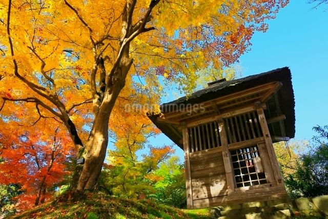 中尊寺鐘楼と紅葉の写真素材 [FYI03059698]