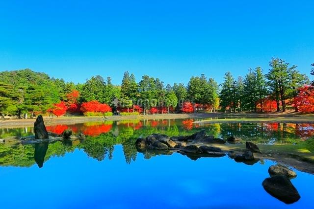 毛越寺の紅葉と大泉が池の写真素材 [FYI03059699]
