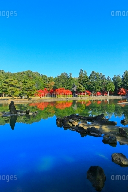 毛越寺の紅葉と大泉が池の写真素材 [FYI03059702]