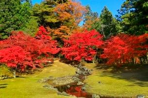毛越寺の紅葉と遣水の写真素材 [FYI03059704]