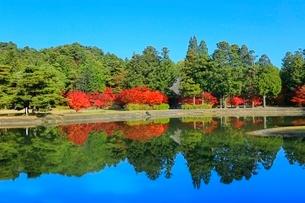 毛越寺の紅葉と大泉が池の写真素材 [FYI03059705]