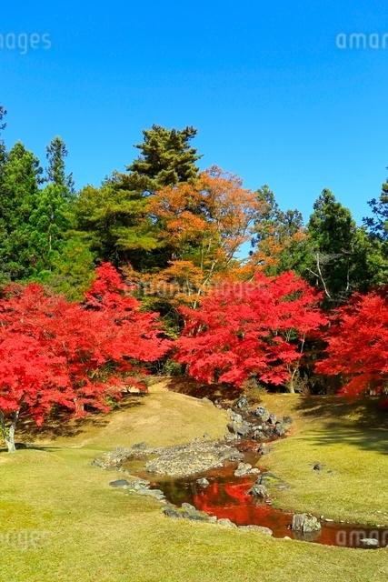 毛越寺の紅葉と遣水の写真素材 [FYI03059707]