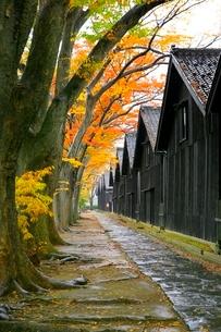 山居倉庫とケヤキ並木の紅葉の写真素材 [FYI03059711]