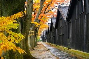 山居倉庫とケヤキ並木の紅葉の写真素材 [FYI03059714]