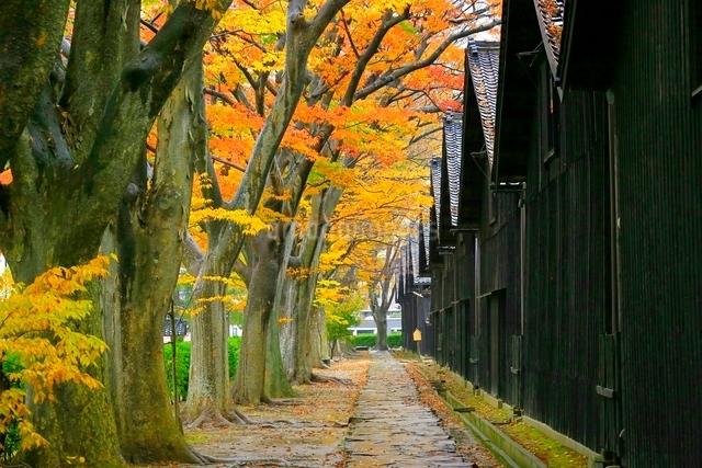 山居倉庫とケヤキ並木の紅葉の写真素材 [FYI03059723]