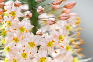 小さな花が集まって咲いている野草の写真素材 [FYI03059728]