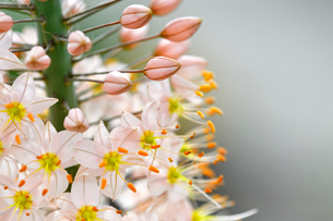 小さな花が集まって咲いている野草の写真素材 [FYI03059729]