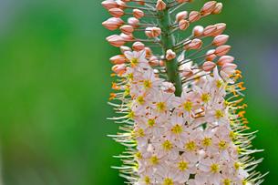小さな花が集まって咲いている野草の写真素材 [FYI03059731]