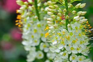 小さな花が集まって咲いている野草の写真素材 [FYI03059732]