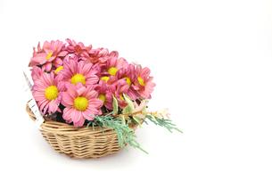 カゴに挿した菊の写真素材 [FYI03059740]