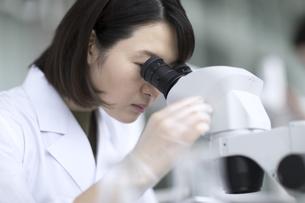 顕微鏡を使って研究をしている女性研究員の写真素材 [FYI03060071]