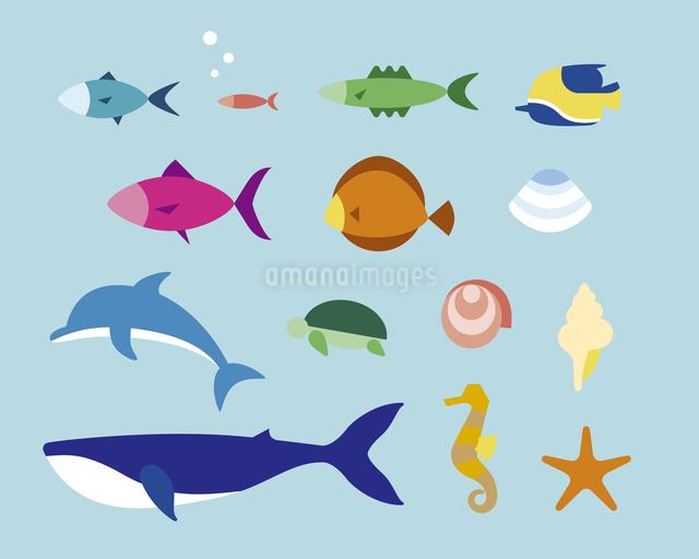 いろいろな鑑賞魚のイラスト素材 [FYI03060172]