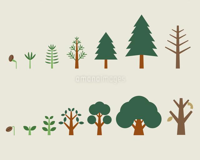 木の成長過程のイラスト素材 [FYI03060176]