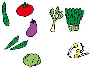 体を冷やす野菜のイラスト素材 [FYI03060498]