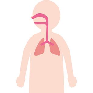 人体内臓呼吸器のイラスト素材 [FYI03060525]