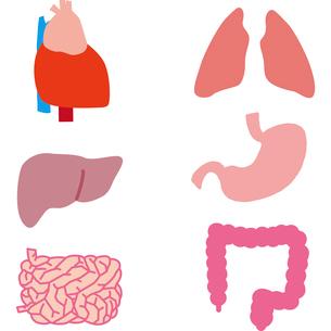 内臓のパーツのイラスト素材 [FYI03060528]