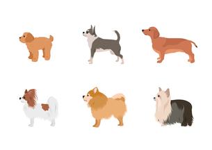 小型犬のイラスト素材 [FYI03060981]