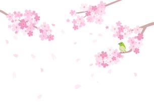 桜とめじろのイラスト素材 [FYI03061009]