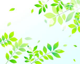 新緑のイラスト素材 [FYI03061158]
