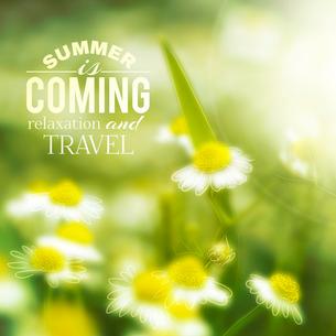 Fresh chamomile, spring background. Vector illustration.のイラスト素材 [FYI03064324]