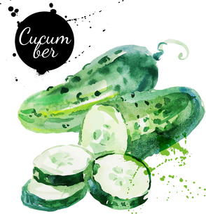 Green cucumber. Hand drawn watercolor painting on white background. Vector illustrationのイラスト素材 [FYI03065395]