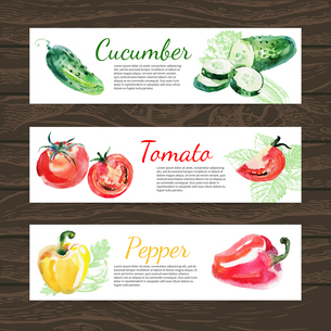 Watercolor and sketch vegetables organic food horizontal banner set. Design with cucumber, tomato anのイラスト素材 [FYI03065409]