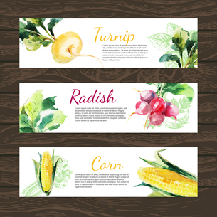 Watercolor and sketch vegetables organic food horizontal banner set. Design with corn, radish, turniのイラスト素材 [FYI03065411]