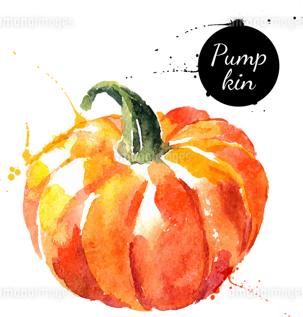Pumpkin. Hand drawn watercolor painting on white background. Vector illustrationのイラスト素材 [FYI03065417]