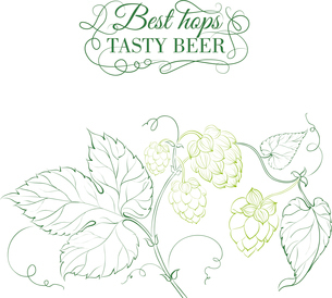 Hop and tasty beer sign over white. Vector illustration.のイラスト素材 [FYI03065935]