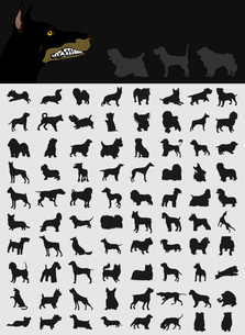Collection of dogs2. Black silhouettes of different breeds of dog. A vector illustrationのイラスト素材 [FYI03066446]