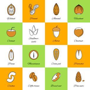 Set of acorn chestnut hazelnut coconut sunflower seeds and nuts in flat line style vector illustratiのイラスト素材 [FYI03066659]